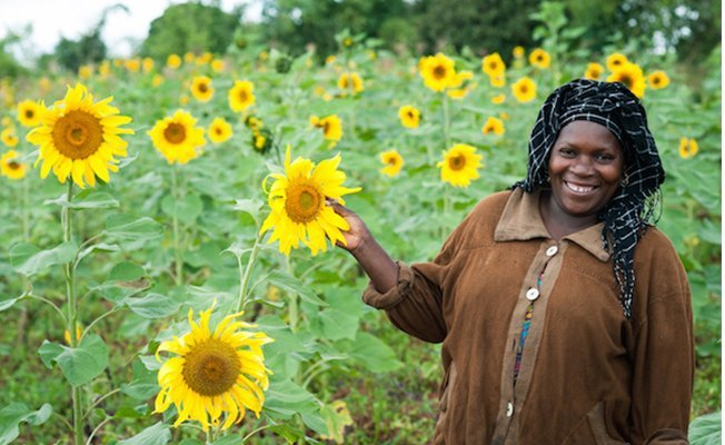 Sunflower supply fails Dodoma